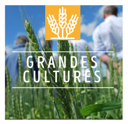 Relier Agronomie et agroécologie à l'économie