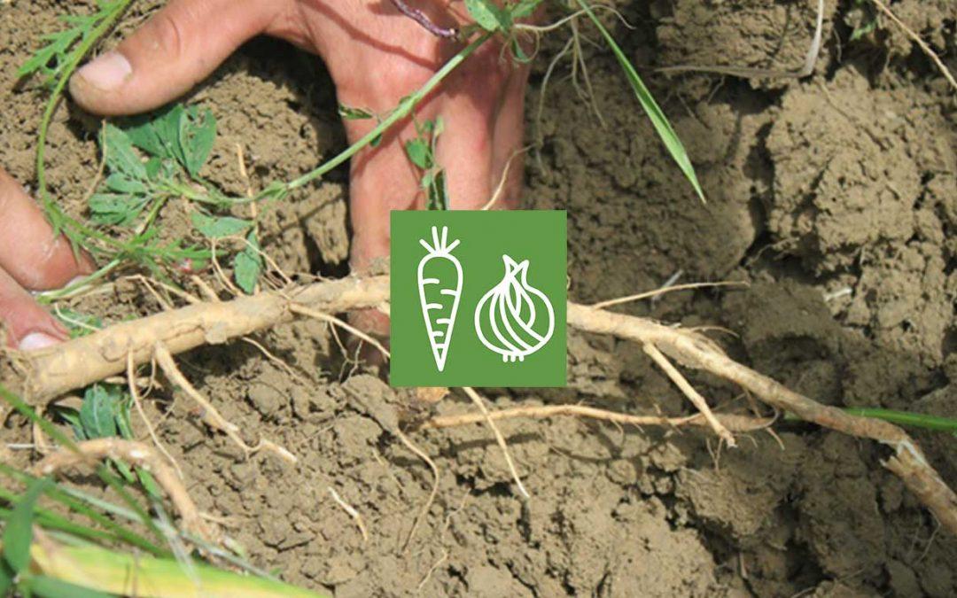 Techniques alternatives de travail du sol en maraîchage biologique