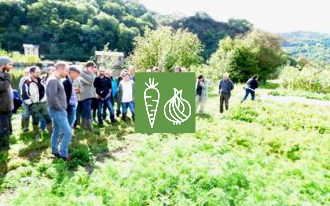 Produire des légumes de plein champ pour diversifier son assolement