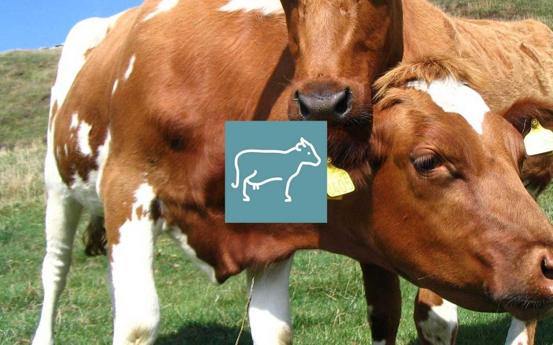 Diminuer ses frais vétérinaires