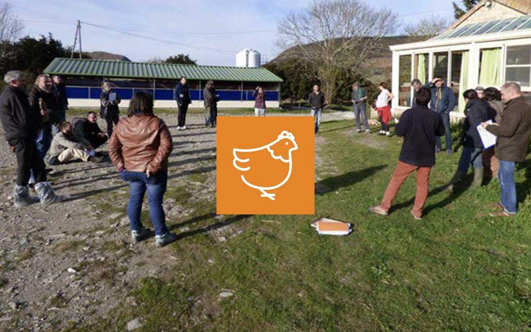 Biosécurité en élevage de volaille Bio