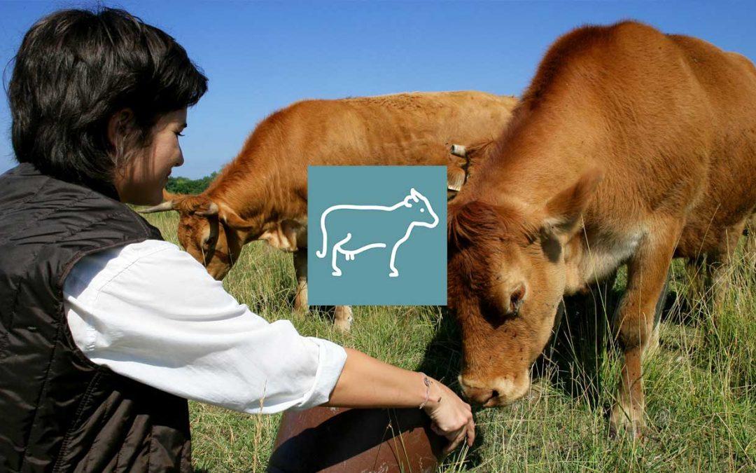 Le marché du bovin viande bio et l'engraissement