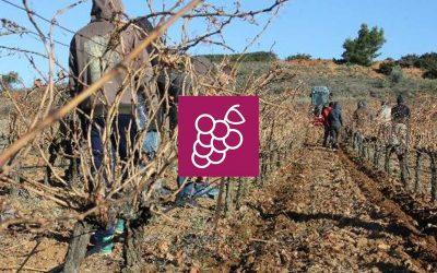 Desherbage mecanique à l'ECOCEP, sol et maladies de la vigne… vers l'AB