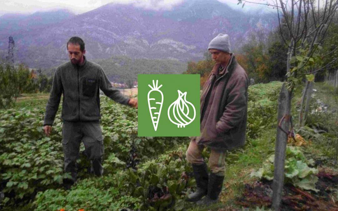 Maraîchage, engrais verts et non travail du sol