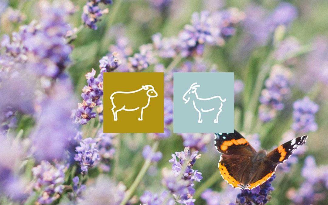 Plantes et santé animale