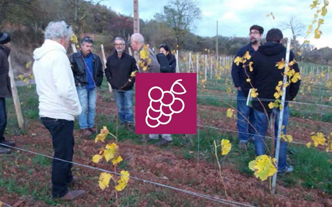 Fertilisation Organique et Engrais en Viticulture