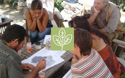 La filière bio de plantes à parfums aromatiques et médicinales regagne du terrain