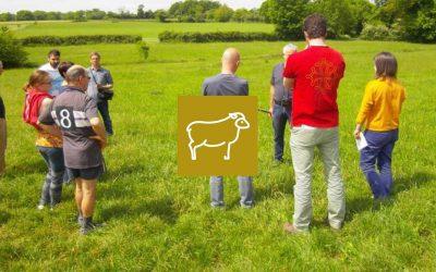 Le pâturage tournant en production ovine laitière