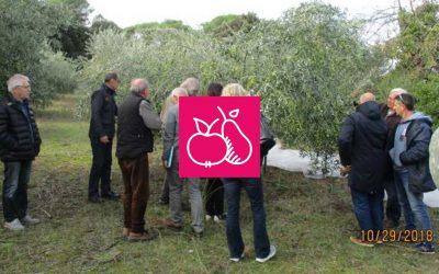 Techniques de lutte alternatives contre la mouche de l'olive